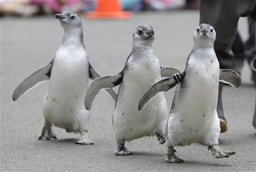 Penguinsmarch
