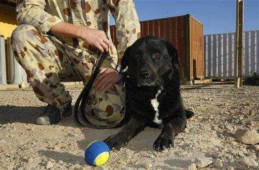 Afghandog