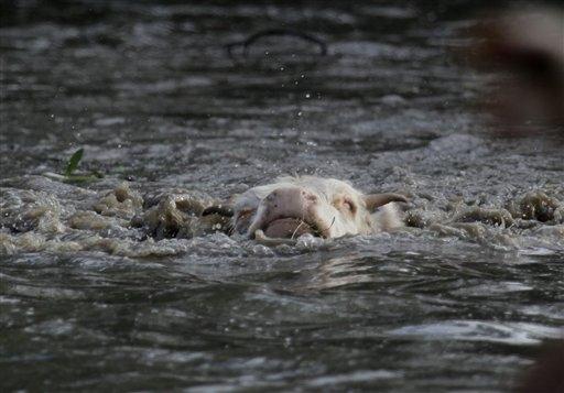 Floodcow