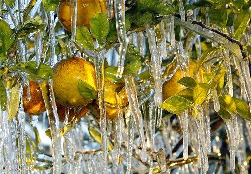 Winteroranges