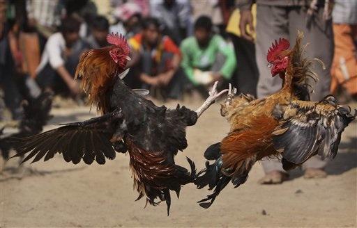 APTOPIX India Fair_Chav
